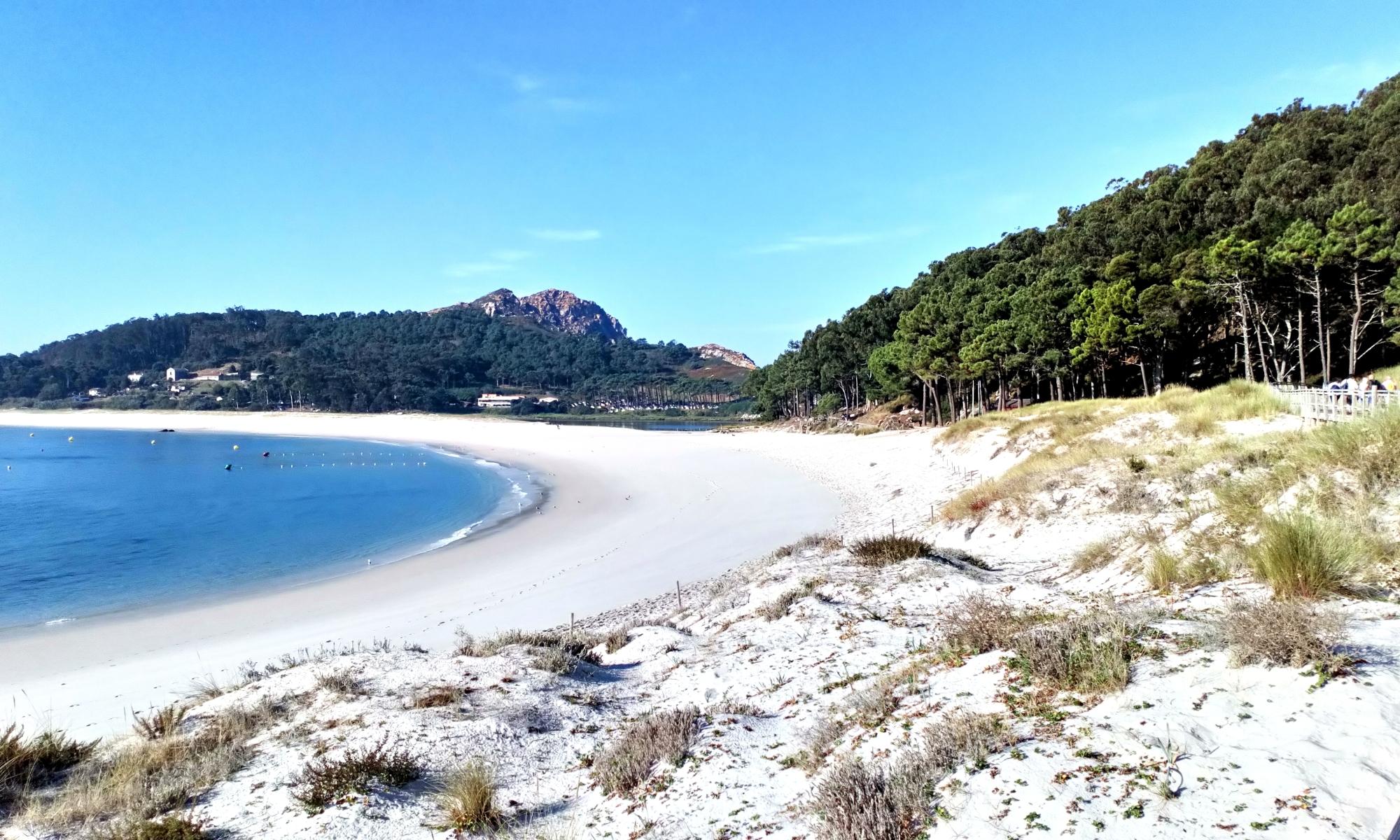Beach with brambles